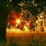 sunrise21 copy
